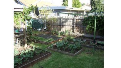 Photo of The Benefits of Building a Raised Bed Garden.