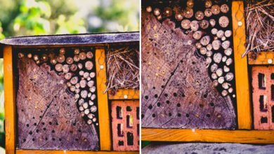 Photo of Accommodating Garden Friends With an Insect Hotel