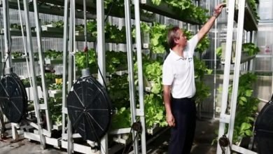 Photo of Vertical Farming: Feeding the Cities of the Future?