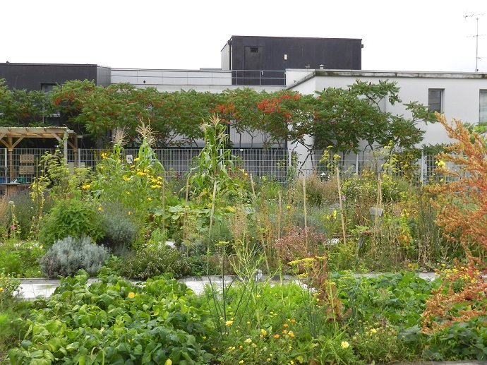 This roof has been guilded! The garden in 2014.