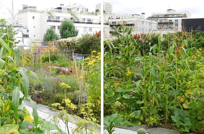 Urban Oasis – provide sanctuary and refreshment: Food and seeds for thought.