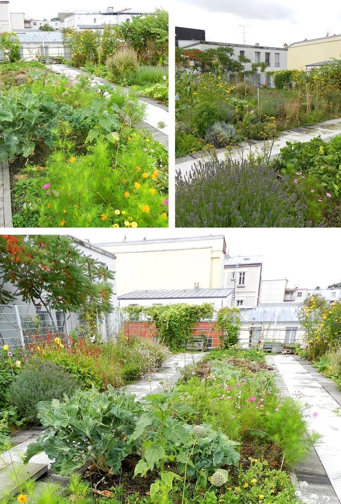 Biodiverse Greenery; intermixed aromatic herbs, pollinator plants, brassicas, aubergine, alliums, fennel, sages and so on…  this garden's focus is more on education and solidarity as opposed to productivity, but still produces an abundance of food and habitat in a city with 21,000 inhabitants per km².