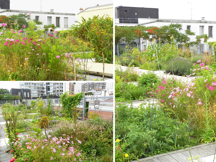 Rooftop Urban Polyculture – a fine blend of herbs, insectary flowers, vegetables and small trees.