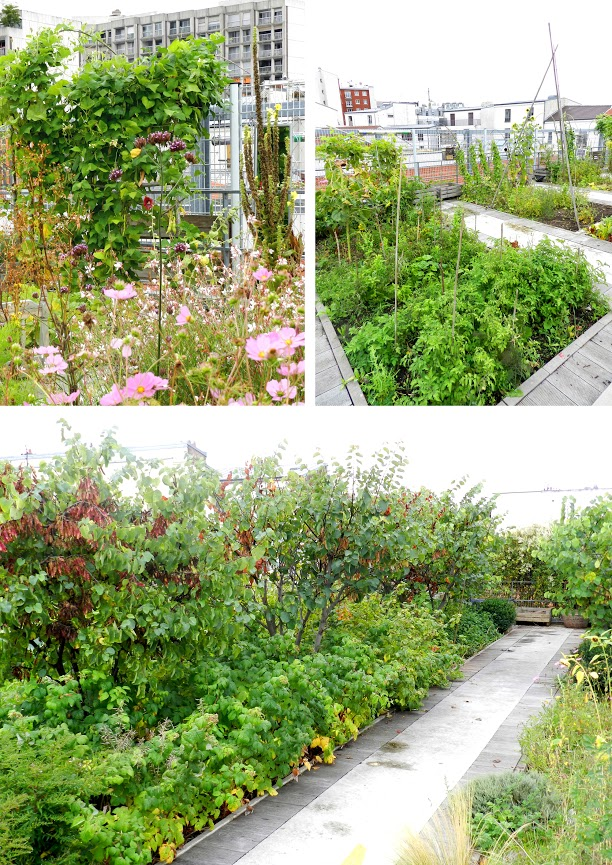 Top left: Cosmos, Verbascum, Verbena and climbing beans. Top Right: Tomatoes, beans, fennel and Sunflowers. Bottom: Leguminous Cercis siliquestrum trees underplanted with raspberries.