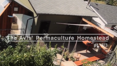 Photo of Our Permaculture Homestead – Video Tour