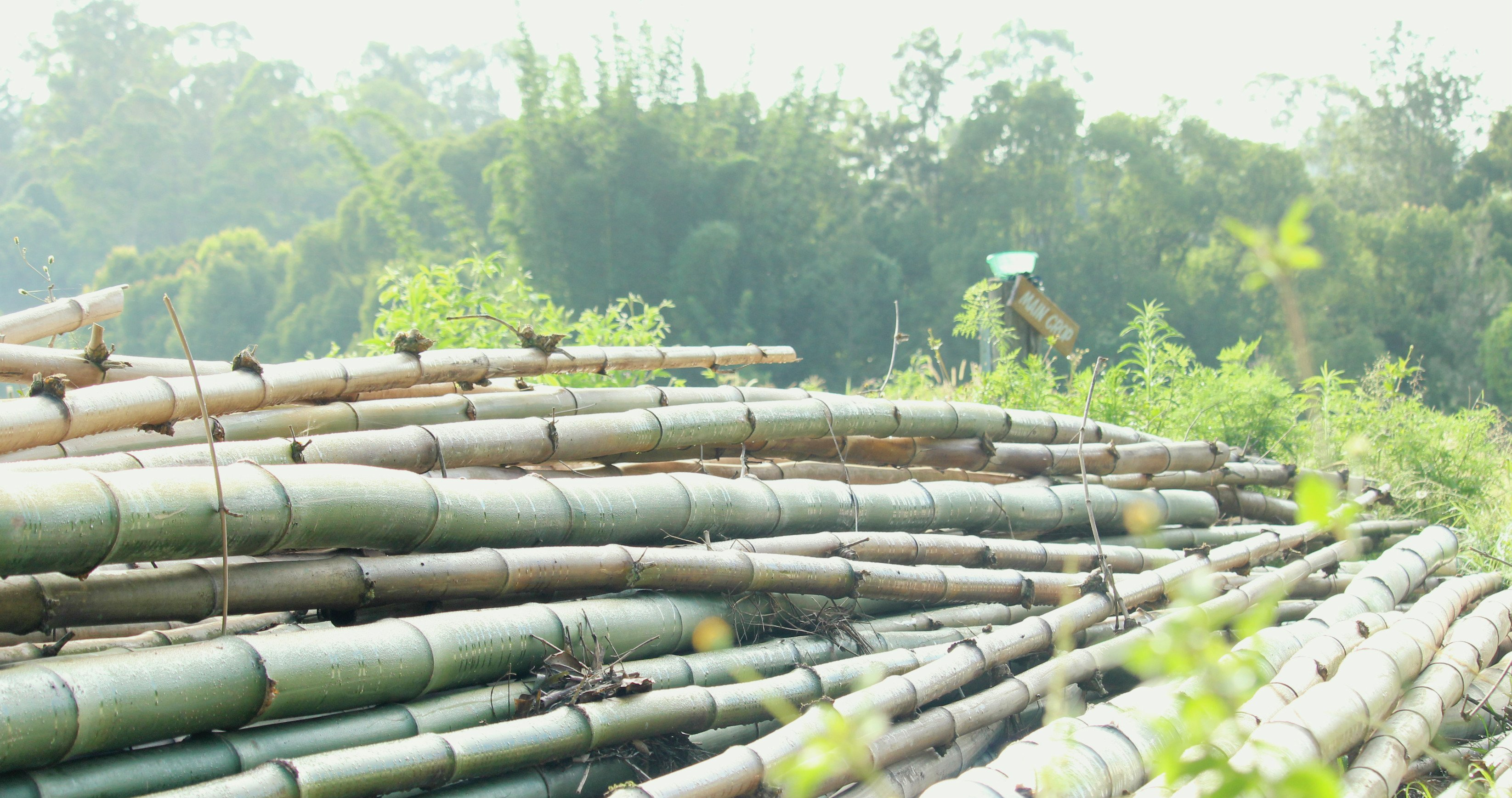 Bamboo-Building