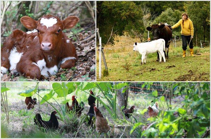 Calf-Lane-way-Food-Forest-Zaytuna-Farm
