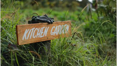 Photo of Another Internship Gets Underway on Zaytuna Farm