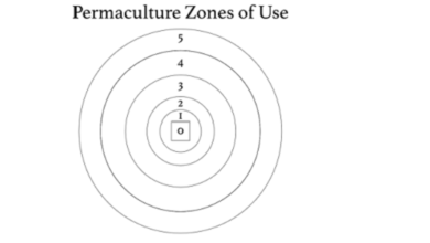 Photo of Permaculture Zones of Use: A Primer