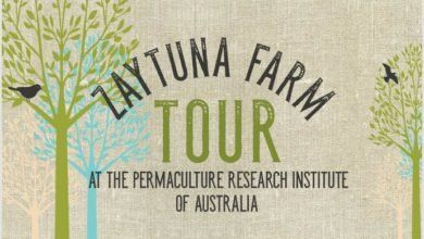 Photo of Winter Zaytuna Farm Tour