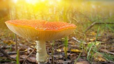 Photo of Fungi – the Sustainable Alternative to Plastic & Wood