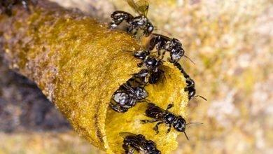 Photo of Your Friendly Neighborhood Stingless Bee