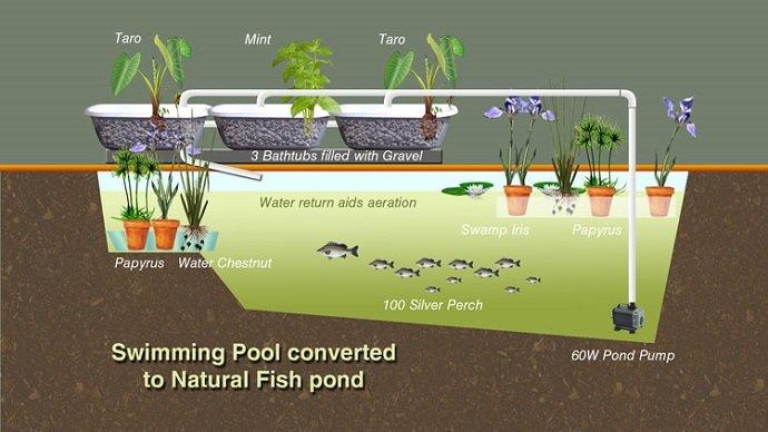 Convert-Swimming-Pool-Aquaculture