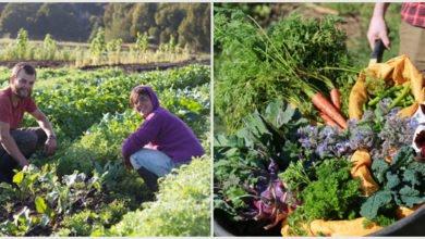 Photo of Zaytuna Farm Yields
