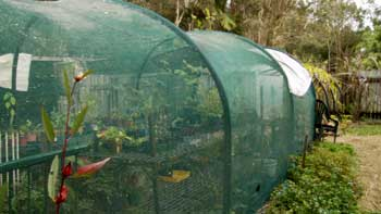 Polypipe greenhouse with Steel Pickets.