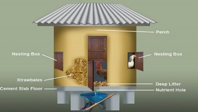 Photo of Insulated Straw Bale Chicken House