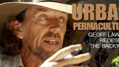 Photo of Embracing Urban Permaculture