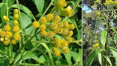 Photo of 6 Magical and Medicinal Trees to Grow in the Tropics
