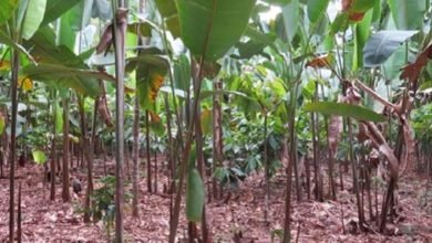 Photo of Made in the Shade: Tropical Trees and Plants That Ain't Starving for the Lime's Light