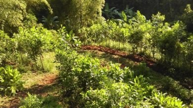 Photo of Tropical Orchard Establishment Practices and Concepts: Part 1 of 3