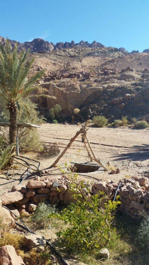 A newly established farm in Nuweiba, South Sinai [Alice Gray]