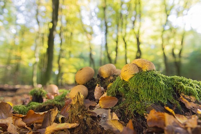 Forest with leaf trees and mushrooms