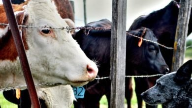 Photo of The Issue of Sustainability: How Veterinary Medicine comes into Play