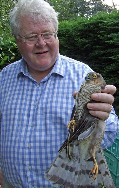 So sometimes you just get magical moments like this. Sparrowhawk freed from garden netting by the author.