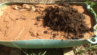 Photo of Compost Worm Experiment
