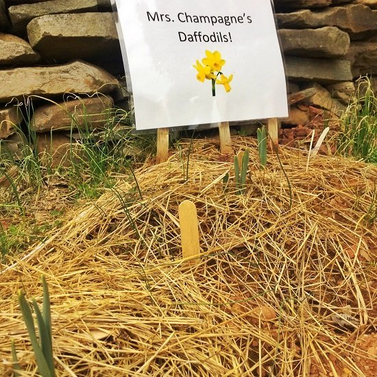 Classes take on garden projects