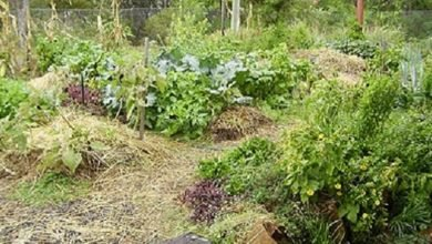 Photo of 5 Simple Ideas for Transitioning into a Permaculture Garden
