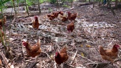 Photo of A Fowl Arrangement Between Us All