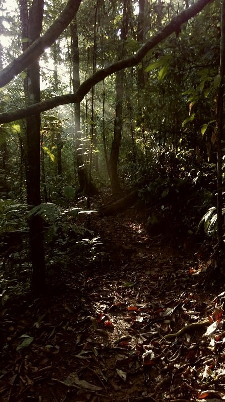 The private wildlife reserve at Rancho Mastatal provide ample opportunities for observing our tropical forest ecosystem.