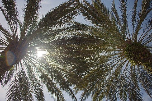 Shady Palms—Courtesy of oliver.dodd