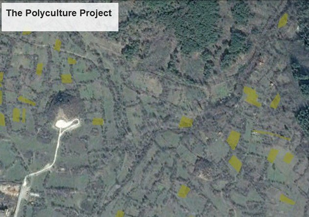 The plots highlighted in green we will host the experimental perennial polycultures starting next year.