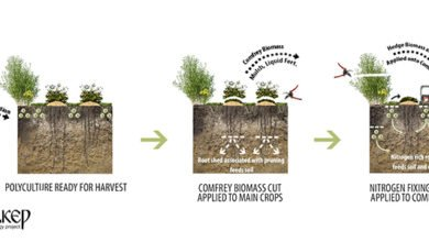 Photo of Perennial Polycultures – The Biomass Belt: Fertility Without Manure