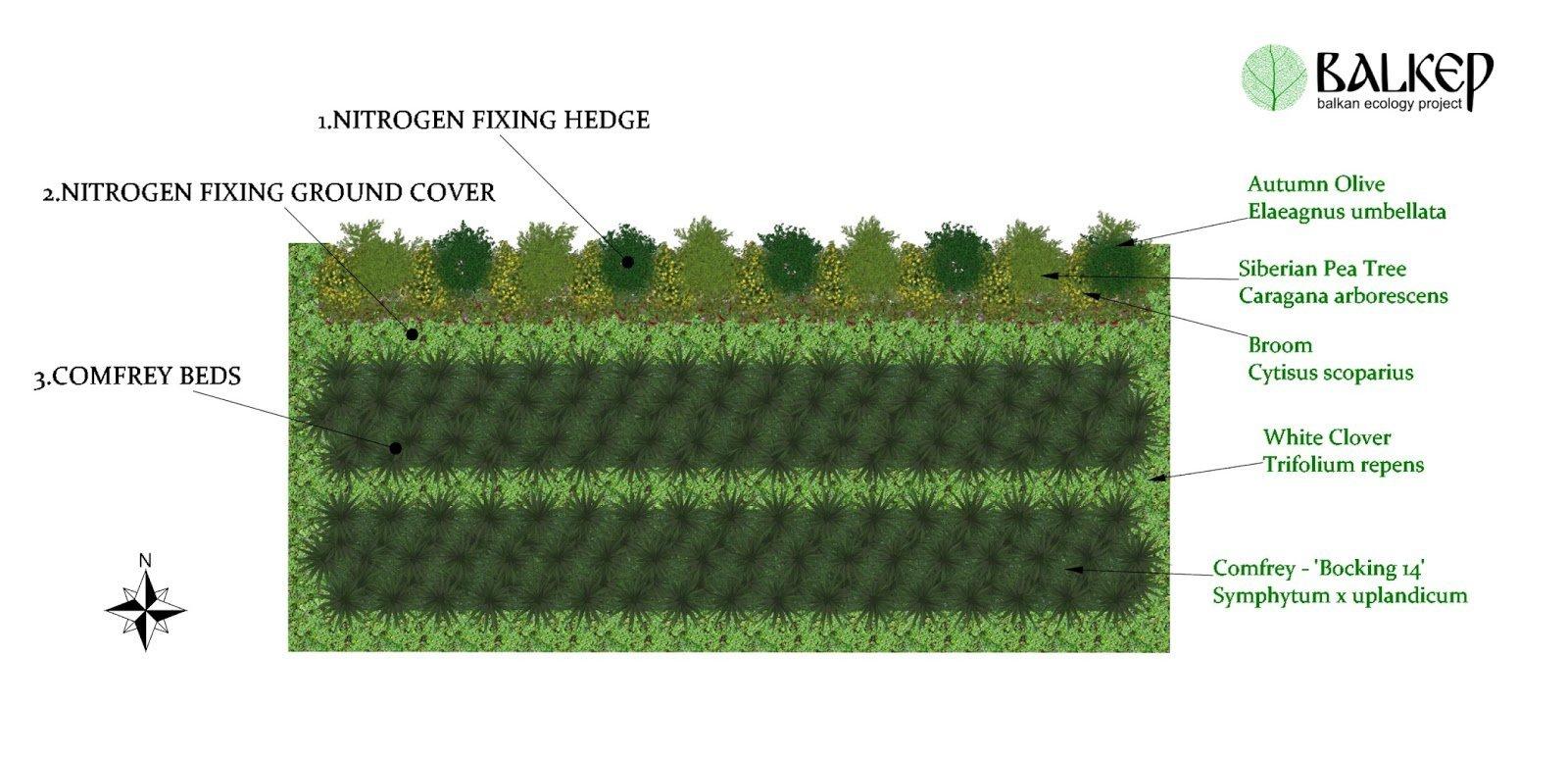 Perennial Polyculture.