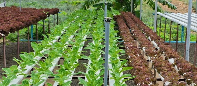 What is Aquaponics and How Does it Work? - The Permaculture Research  Institute