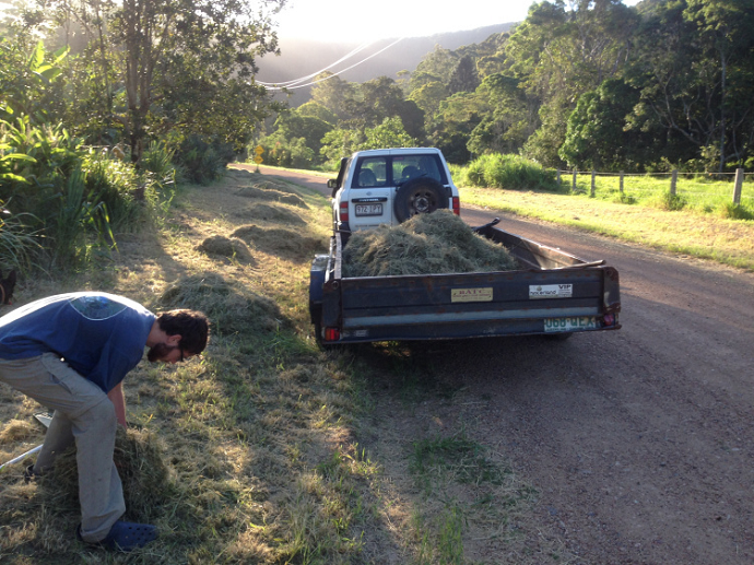 Collecting the road verge mulch. ( this was cut with the neighbors mower before we got the scythe)