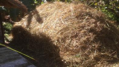 Photo of Mulch in Abundance
