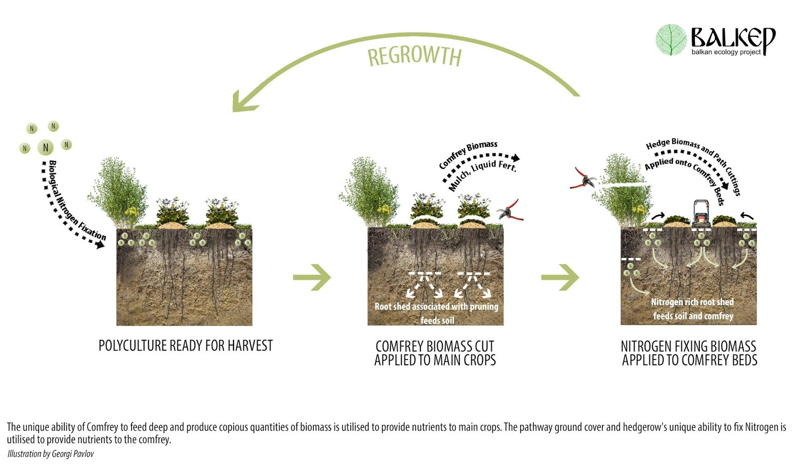 Permaculture_Polyculture_Balkan_Ecology_Project_Biomass_Belt