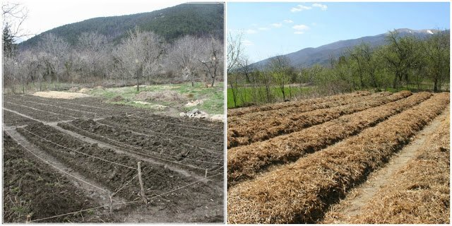 Raised Beds in our Market Garden.