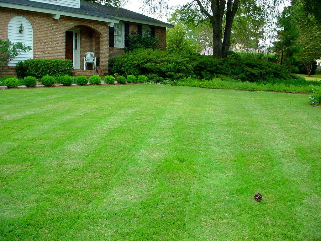 """""""The Perfect Lawn"""" (Courtesy of Sir Mildred Pierce)"""