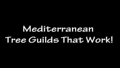 Photo of Mediterranean Tree Guilds That Work!