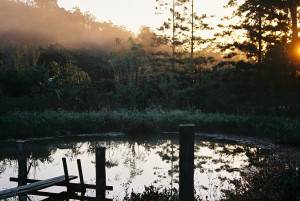 The pond in the morning at Maungaraeeda, home of DIYFoodandHealth.com and the Permaculture Research Institute Sunshine Coast Inc