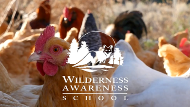 Photo of Permaculture – Anake Outdoor School Curriculum