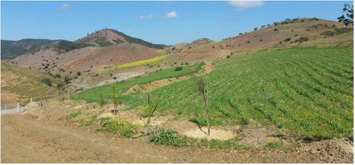 Green-landscape
