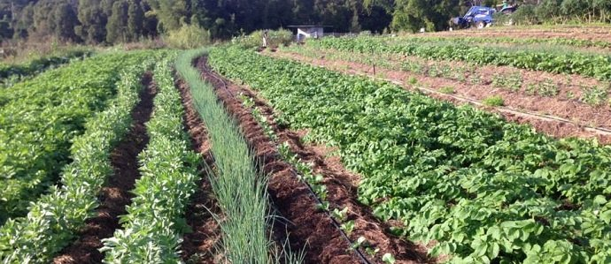 19 How to Start Organic Farming Practices in Nigeria