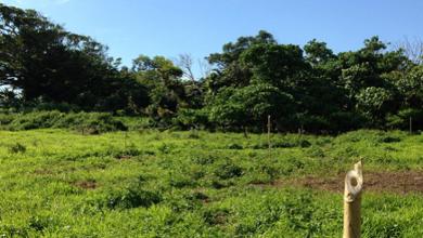 Photo of Permaculture Designed Primary School in Vanuatu