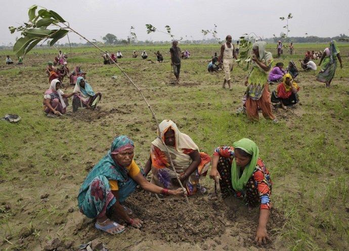 Women plant saplings. Image credit: AP Photo/Rajesh Kumar Singh